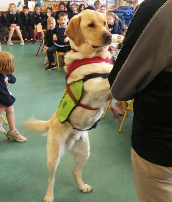 Irish Guide Dog Visit